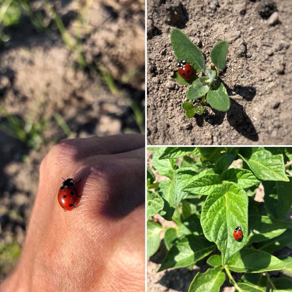 Huerto ecológico el calabacín rojo